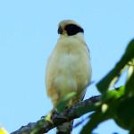 Observación de Aves-3