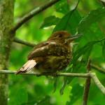 Observación de Aves-4