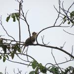 observacion-de-aves-1