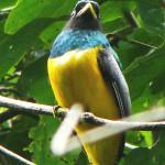 Observación de Aves-2